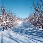 Vintern-1-