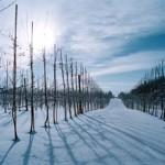 Vintern 6