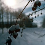 Vintern 8